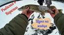Рыбалка в Карелии. Щука на живца, окунь на балансир и мормышку.