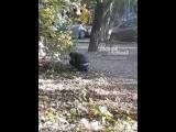 Наркоман на пр Стачки 13.10.2018 Ростов-на-Дону Главный