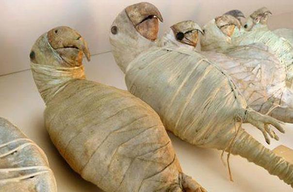 Полюбуйтесь, как выглядели мумии попугаев. Дело в том, что древние египтяне бальзамировали не только фараона, его жен и прочих сановников, но и животных: птиц, котов, скарабеев, бабуинов,
