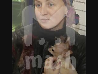 Врачи из Хабаровска прооперировали крошечный головной мозг чихуа-хуа
