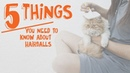 5 вещей, которые нужно знать о пилобезоарах / 5 Things You Need to Know About Hairballs