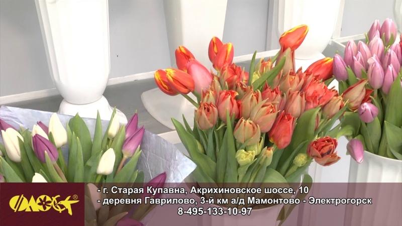 Садовый центр Флос акция на цветы к 8 Марта