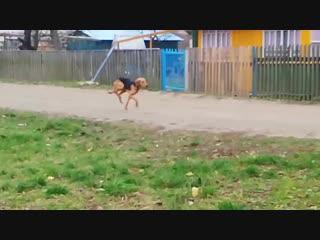 Пёс на Льва Толстого, Лида