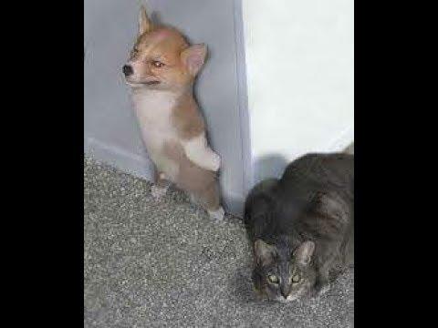배꼽빠질 웃긴 강아지 영상 모음 ♥ 세계에서 가장웃긴 강아지 영상ㅋㅋㅋ12619