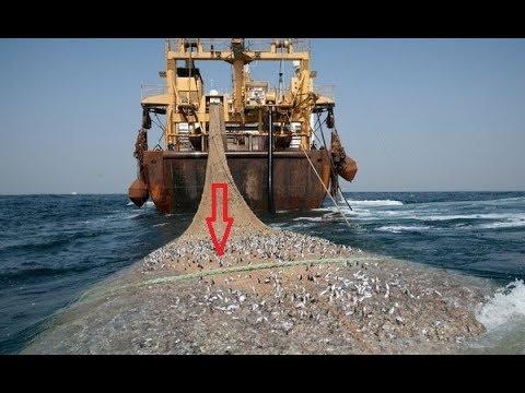 Mesin Penangkap Ikan Terbesar Bisa Habis Ikan Di Laut Klo Gini