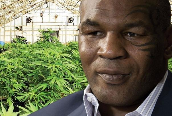 Майк Тайсон запускает ТВ-шоу о жизни боксера-владельца фермы марихуаны.: Тайсон создаёт телекомедию, основанную на его жизни как предпринимателя и владельца фермы. Звезды шоу: сам Майк Тайсон,