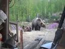 NeomidZoo. Не шути с медведем. Шокирующее предсмертное видео