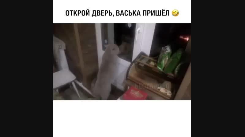 Открой дверь Васька пришол