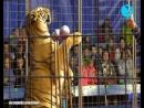 Первое представление Ростовского цирка шапито Арена Макао в Чапаевске (эфир ТК Буревестник от 21 09 2018)