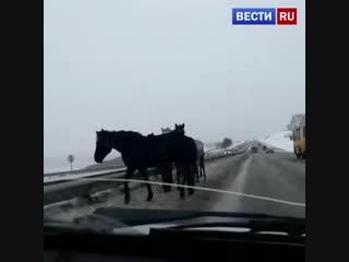 Табун лошадей выбежал на скоростную трассу