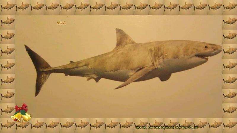 Các con vật sống dưới nước cho Bé nhanh biết nói/Con cá