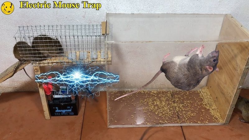 Best Electric Mouse Trap Electric Mouse Rat Trap Work With Battery 12V Mouse Reject
