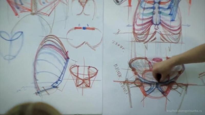 Анатомия торса. Александр Рыжкин