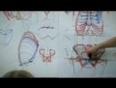 Анатомия торса Александр Рыжкин