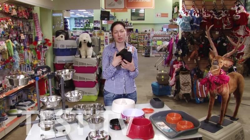 Посуда для лучшего друга Какая миска подойдет вашей собаке