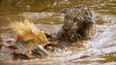 Jaguar Orphans go for a Swim | Jaguars Born Free | BBC Earth