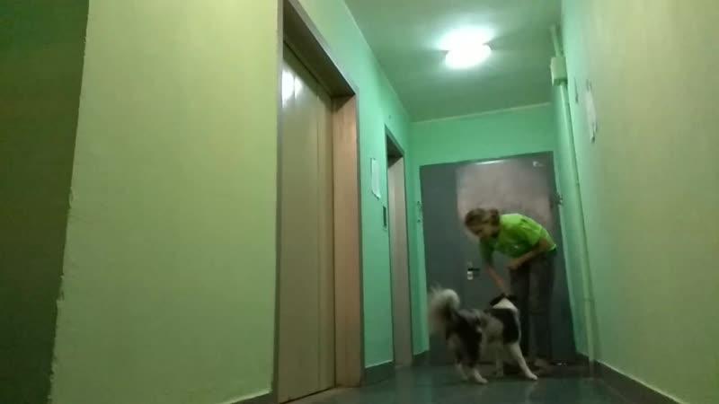 Послушка в коридоре (15.10.18)