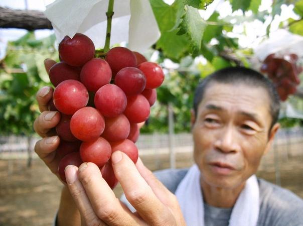 uby Roman - самый дорогой в мире сорт винограда