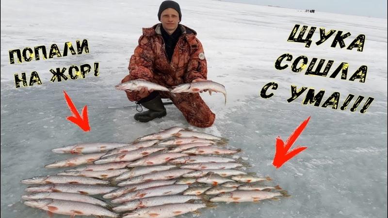 ОФИГЕТЬ! Нереальный ЖОР щуки! Лучшая зимняя рыбалка за 10 лет! Ловля на жерлицы.