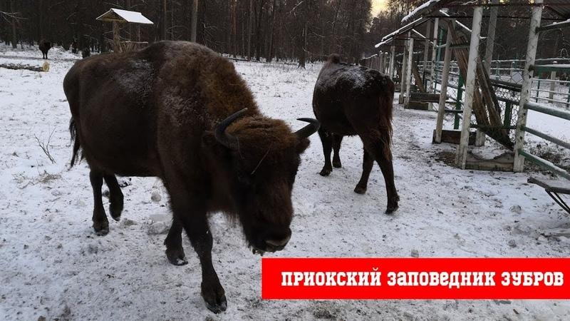 Приокский заповедник Зубров