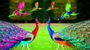भारत के 10 सबसे खूबसूरत पक्षी | Top 10 Most Stunningly Beautiful Birds in India Part-1