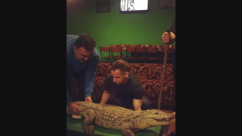 Поднимать Нильского крокодила весом в 50 килограммов это реально СТРАШНО 😱