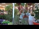 День рождения ЗО орхидеи колокольчики агава