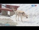 Собачье дело сможет ли закон повысить культуру владельцев четвероногих