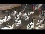 контроль за уборкой (стая птичек)