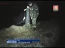 Только за первую декаду декабря сотрудниками Брестской областной инспекции охраны животного и растительного мира выявлено около 30 нарушений природоохранного законодательства.