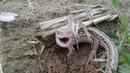 Ящер пойман на закладках/conversation with a lizard