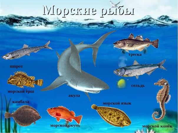 Разница между морскими рыбами и речными Рыбы многочисленный надкласс (по традиционной классификации) водных животных, играющий огромную роль в жизни человека. Он включает три класса хрящевые