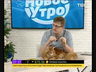 18-12 Советы ветеринара: Кот есть мишуру