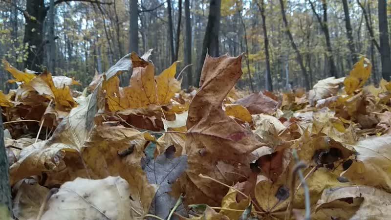 Осень в парке Покровское - Стрешнево