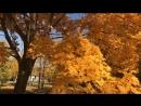 Моя осень 🍃🌿🍂❤️