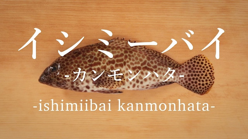 イシミーバイ〈カンモンハタ〉のさばき方 - How to filet Honeycomb grouper -|日本さばけるプ12