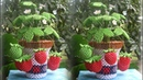 3D Origami Strawberry Pot Tutorial| DIY Paper Strawberry Pot Home Decoration