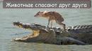 14 Случаев невероятного спасения животных из лап хищников