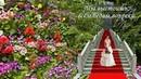 Дорогие Женщины С наступающим Вас Женским Днем 8 Марта ! Здоровья, счастья, любви, удачи