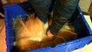 Stuck Barefoot in Glue