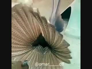 Bass BirdZ Nectar LT