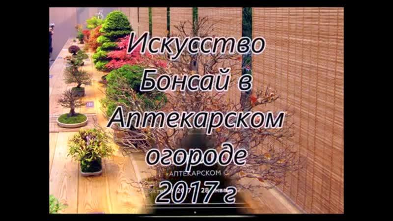 Выставка Бонсай в Аптекарском огороде 2017 г