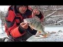 КИЛОГРАММОВЫЕ ОКУНИ РАЗДАЮТ В ЛЕСУ Рыбалка по первому льду Ловля крупного окуня и судака