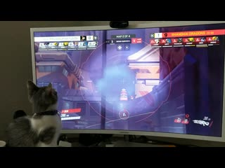 He just sat there watching owl for like 30 minutes