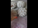 Шаробанты с серыми лепестками