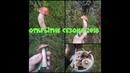 В Лес за грибами,Открытие сезона.Тихая Охота.