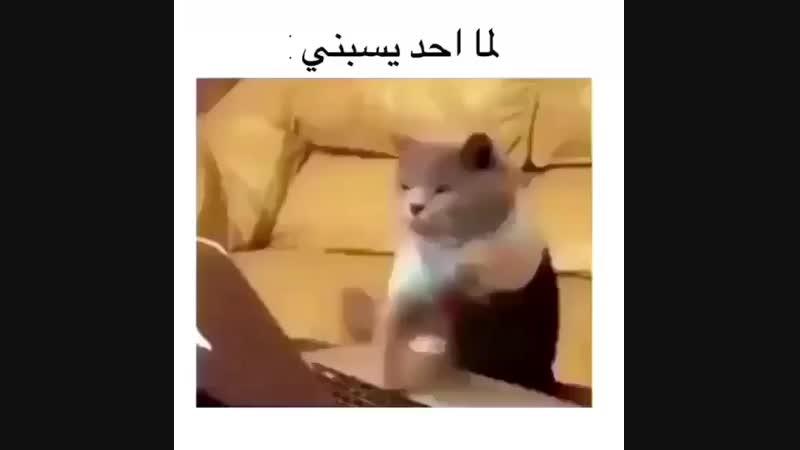 بيج ع ــراقي رد فولو on Instagram اي وربي التشبي 0 MP4 mp4