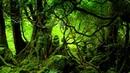 Зловещие места планеты Лес Аокигахара