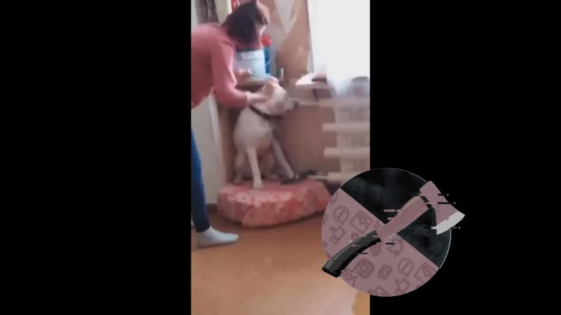 Живодерка надругается над привязанным псом