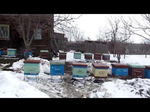 Начало пчеловодного сезона 2019
